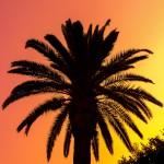 Palmtree sundown silhoutte
